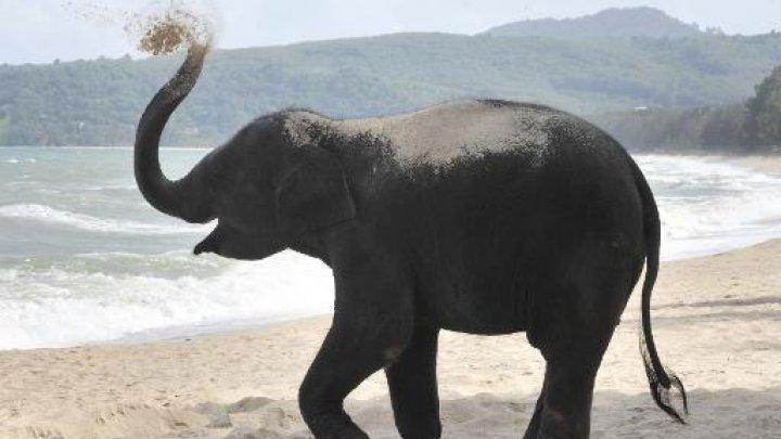 Le Brésil aura le premier sanctuaire d'éléphants d'Amérique latine - AFP