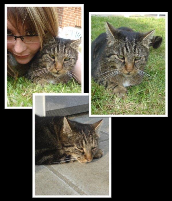 Les ptits bonheur qui rendent la vie plus belle.. Tigrou, un amour de chat et une grande part de bonheur dans ma vie .. (l)