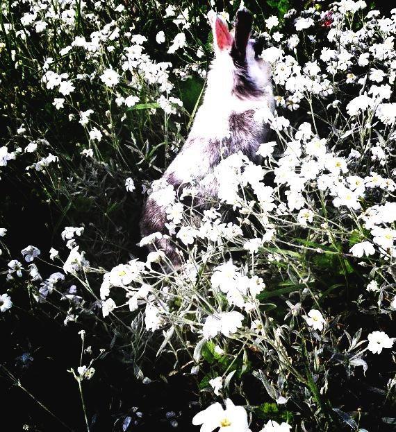 One Shot n°153 : Fleurs-Perdues