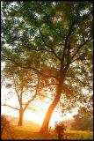 Photo de photos-nature37