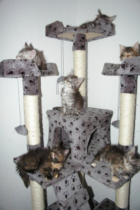 les 6 chatons