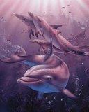 les beau dauphin