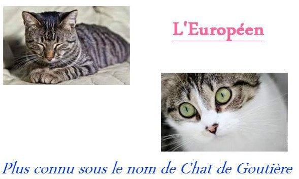 Race n°1 → L'Européen.
