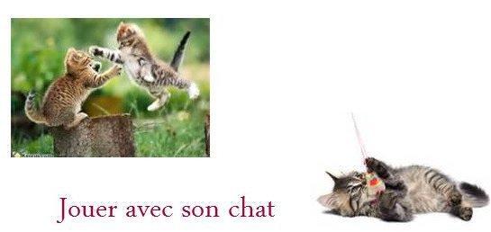 Conseil n°1 → Jouer avec son chat