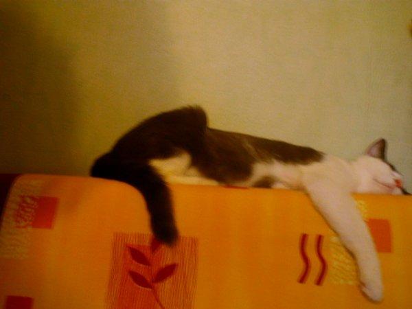 Perdu chaton à La Ferté sous Jouarre