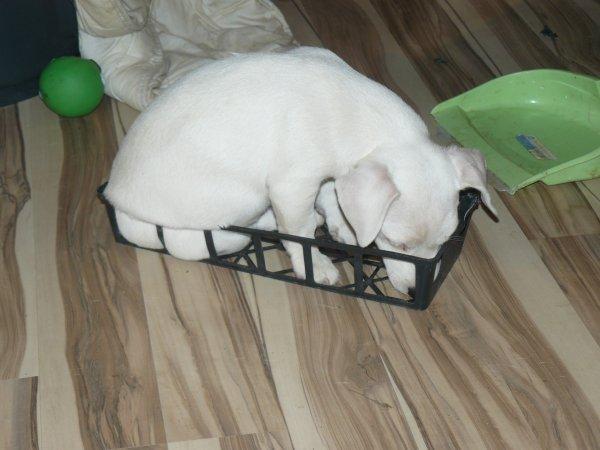 si que je peux me coucher dans le casier à fleurs !!!