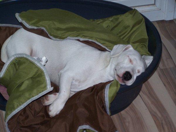 une petite sieste avant le réveillon pour Fripouille ....