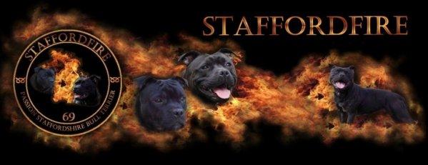 C.F.A. Bull Terrier, American Staffordshire & Staffordshire Bull Terrier