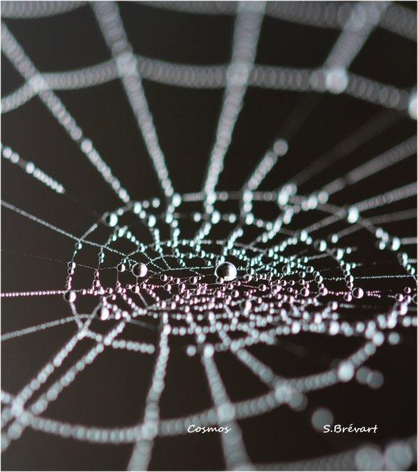 Les toiles d'araignées dans le brouillard.