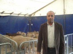 Fête du sacrifice: augmentation des abattages à Droixhe