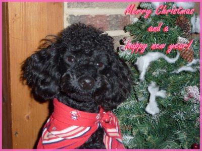 Joyeux noël, meilleurs voeux pour 2011!