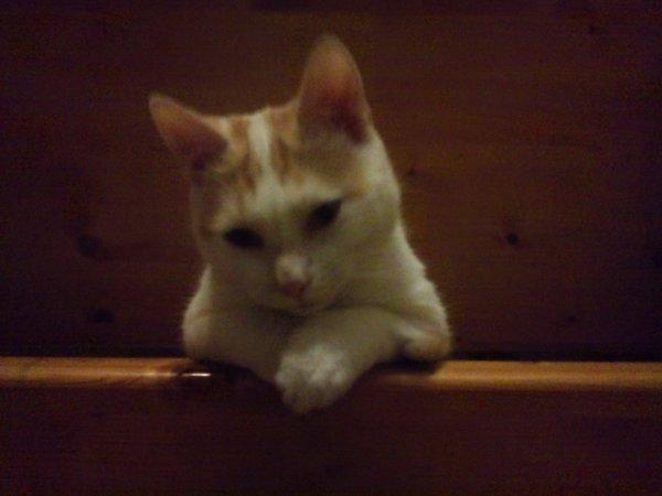 Mon ptit chat