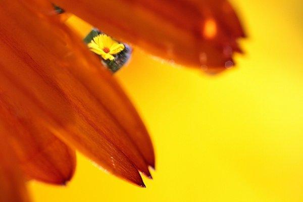 Goutte florale