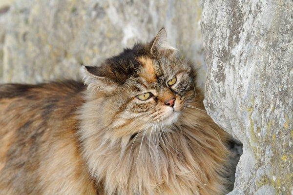 Ceci est un chat