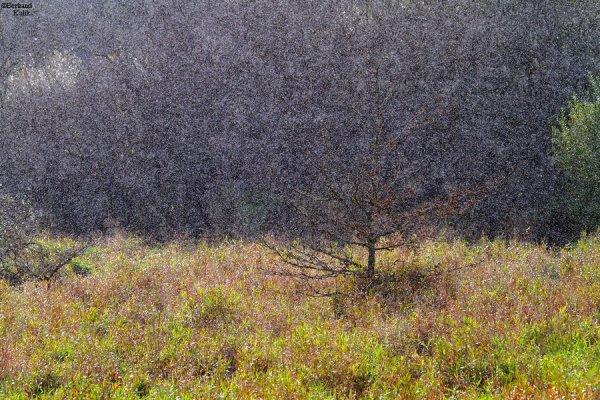 Pointillisme de saison
