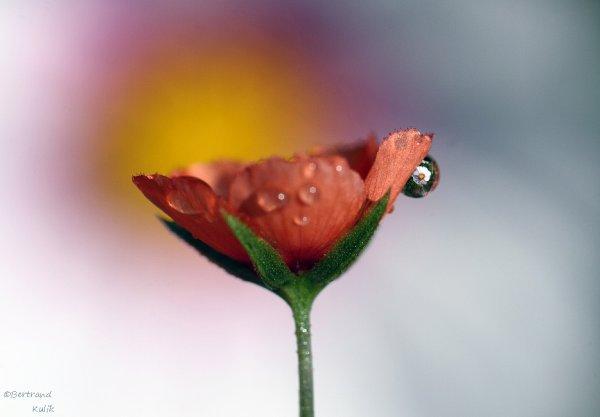 Ptit fleur