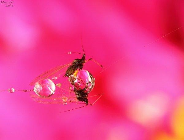 Flower drop en duo