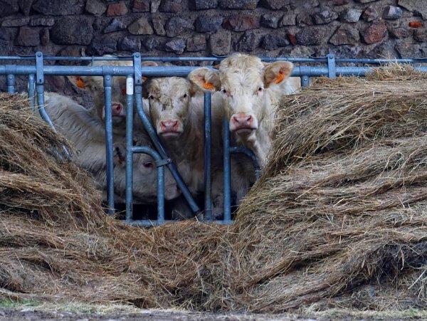 Gentlecaw farmers