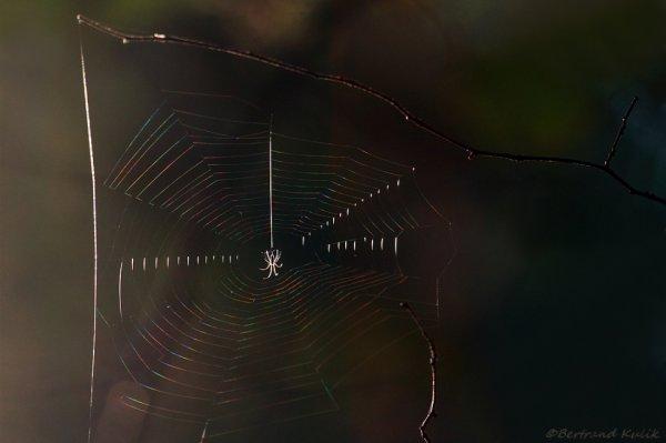 Spider flag