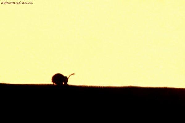 Le rêve éléphantesque du collembole