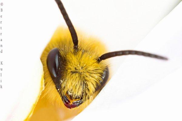 Punky l'abeille