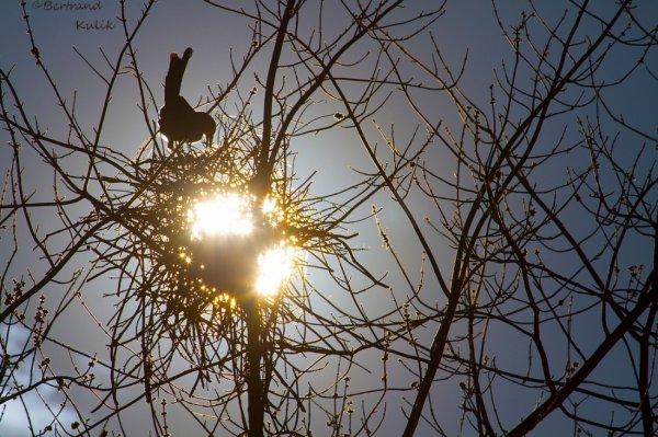 Crow's nest light