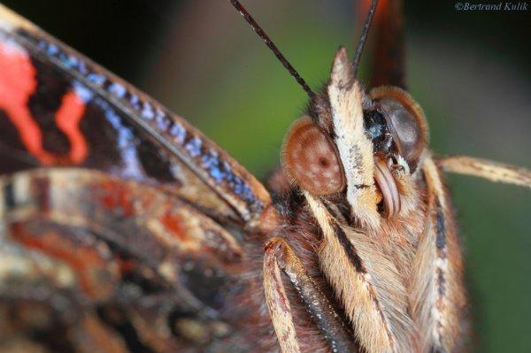 Face au papillon