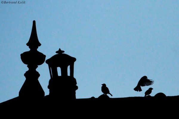 Par dessus les toits