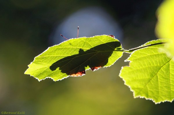 Papillon de jour, papillon de nuit