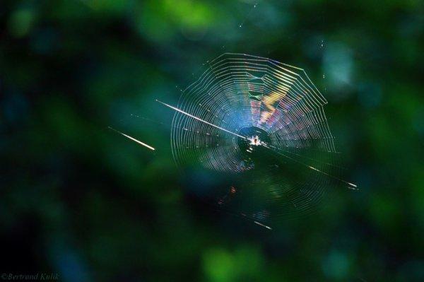 Spectrum spider web