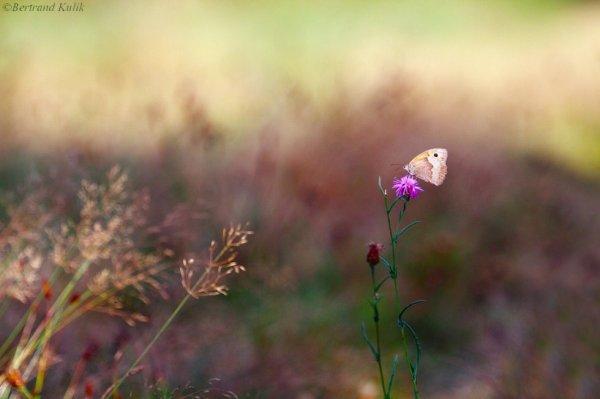 Butterfly spirit