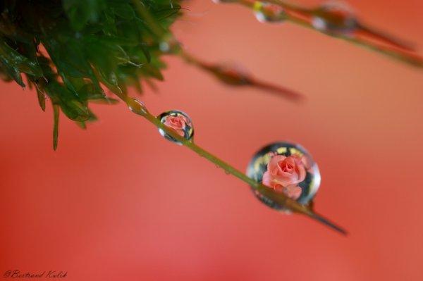 Drop of Valentin