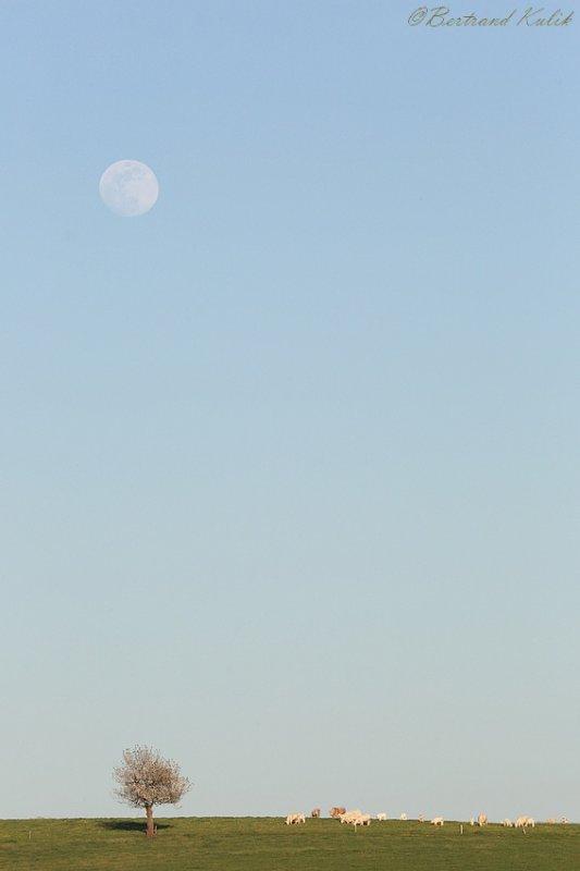 Lune Morvendelle