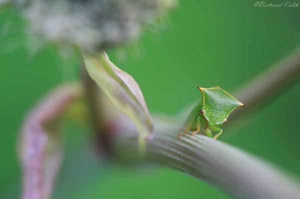 Hi, I am green