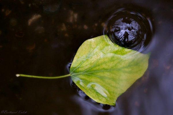 Water life spirit