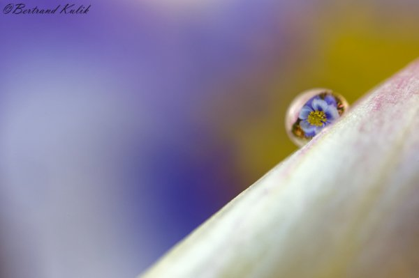 Sweet drop