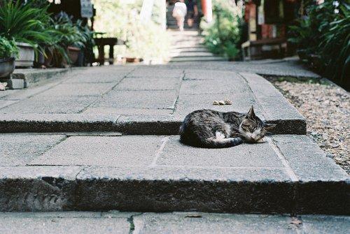 Die Augen einer Katze sind Fenster, die uns in eine andere Welt blicken lassen.