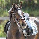 Photo de golden-horses