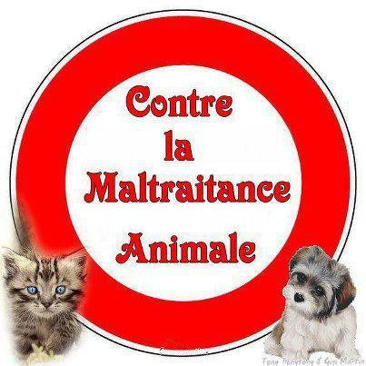 La maltraitance animal
