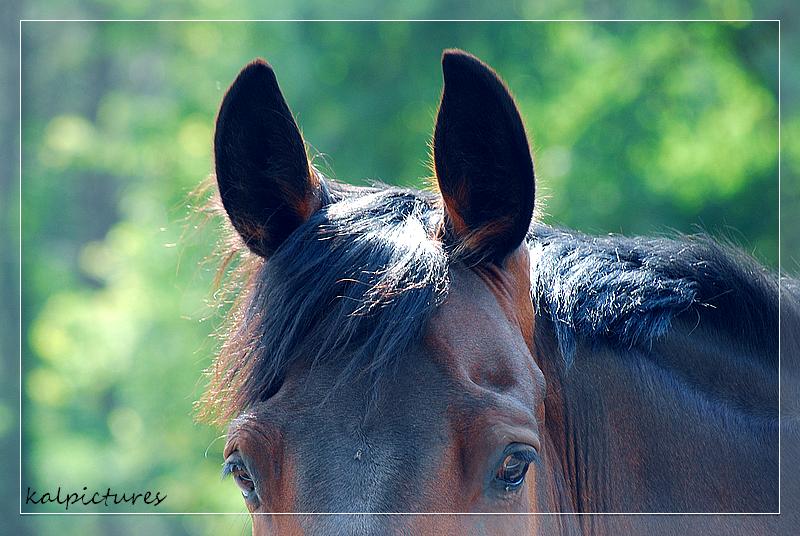 Un amour de cheval,  Quervin de Souzote ♥
