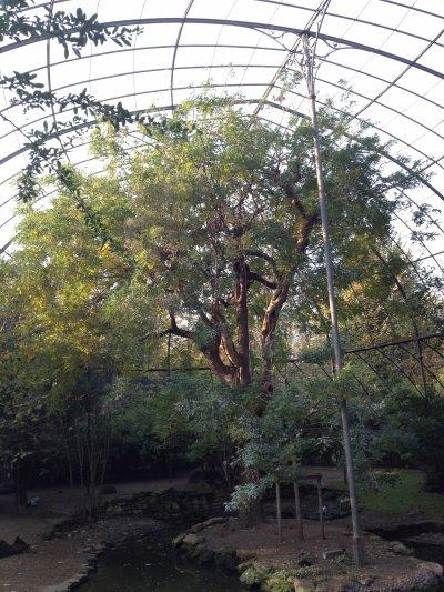Une après-midi au Jardin des plantes de Paris... ça fait du bien...