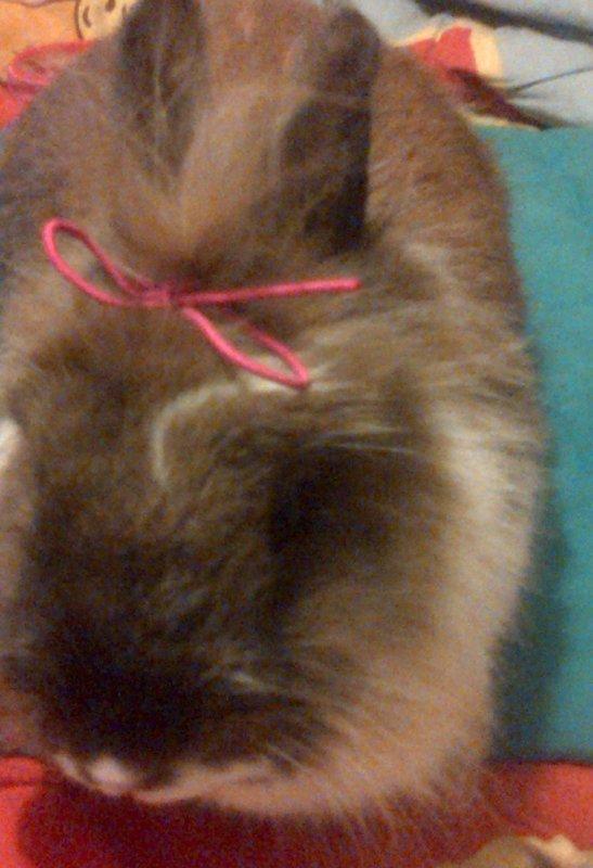 Lilou, son noeud et moi.