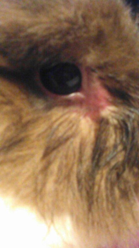 La blessure de Lilou