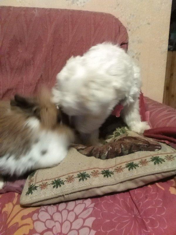 Lilou chez la vétérinaire