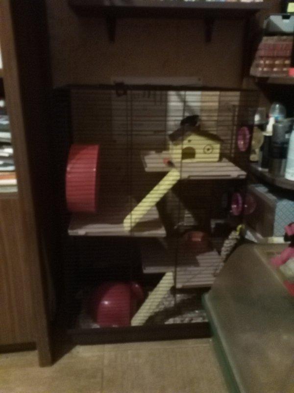 Nouvelle cage !