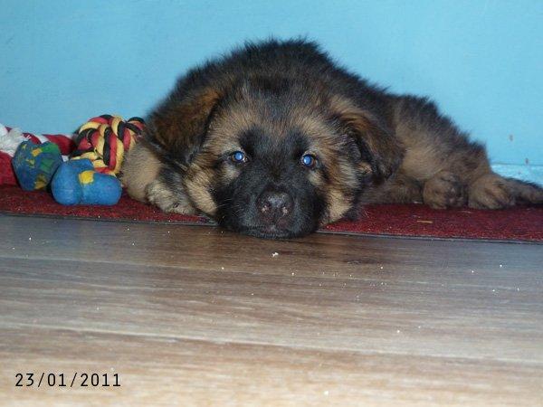 [27 janvier 2011] Finook et son coucouche panier