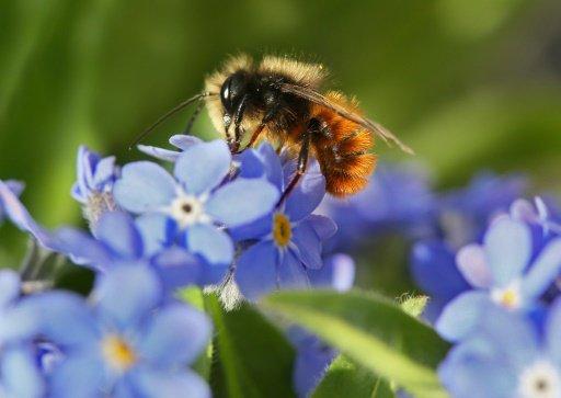 Moins d'abeilles, moins de papillons