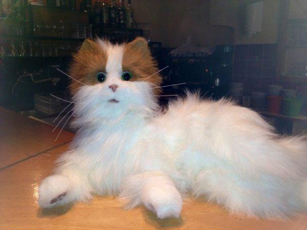 Un chat en peluche dans un restau
