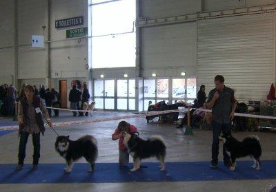 Expo metz chien finnois de laponie classe ouverte male for Adresse metz expo