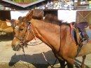 Photo de poney-v-l-b